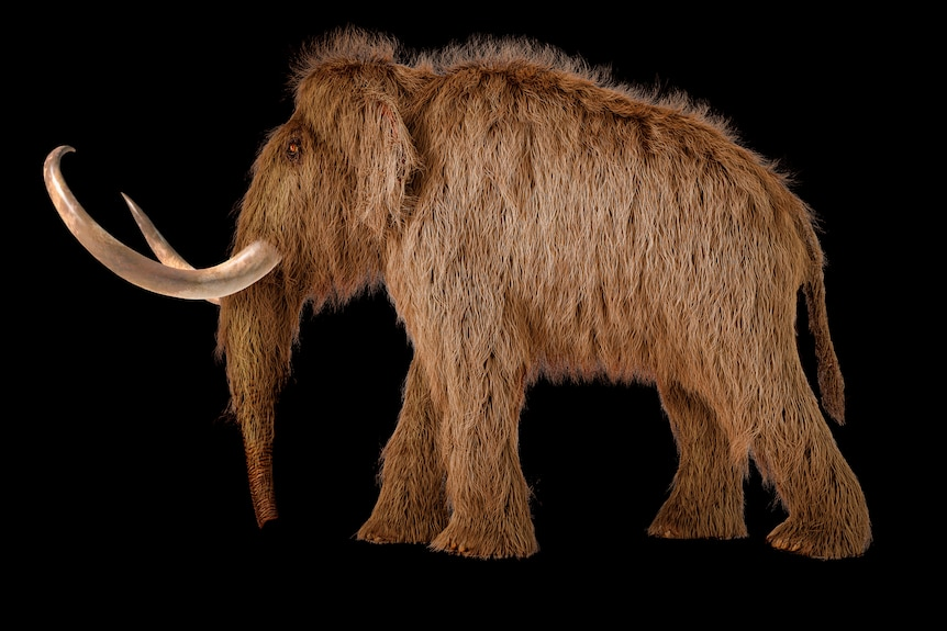Woolly mammoth realistic 3d illustration viewed from a side.