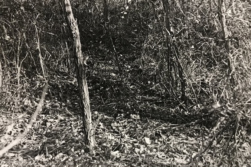 A black and white image of a clearing in the woods. The image pans down to the ground.