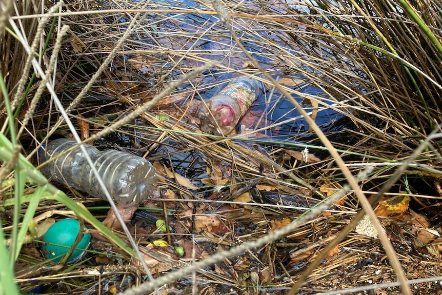 Plastic bottle floating in water in reeds in a waterway.