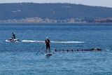 Spectators touching a whale in Hobart's River Derwent.