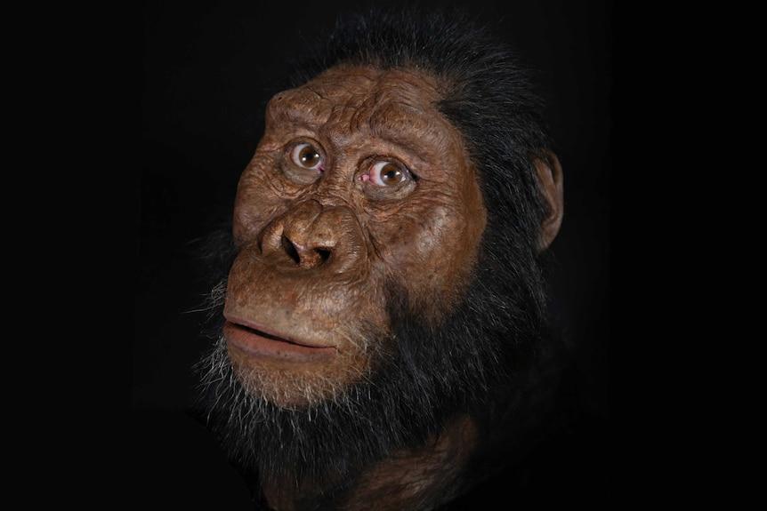 Reconstruction of Australopithecus anamensis