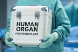 A person dressed in surgical scrubs holds a cooler box designed for transporting organs.