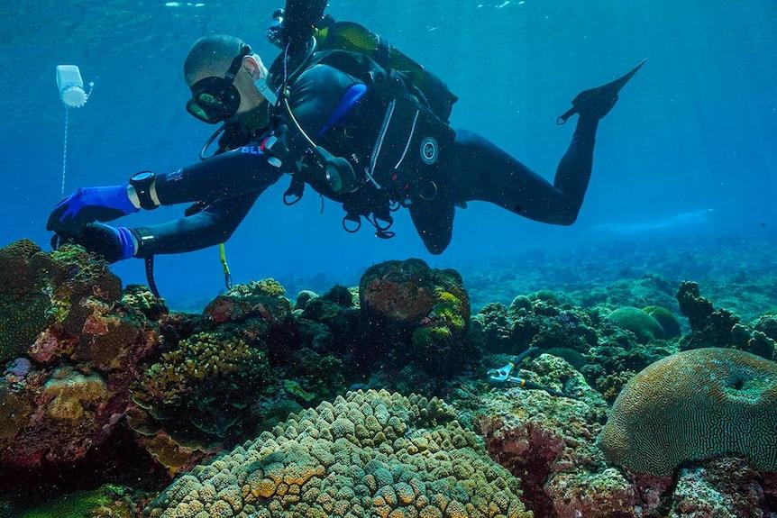 A man in scuba gear touching coral
