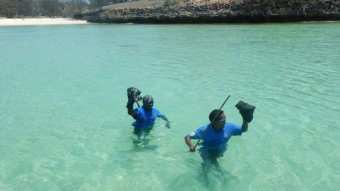 Anindiliyakwa sea rangers stand waist-deep in clear waters off remote beach holding up specimens