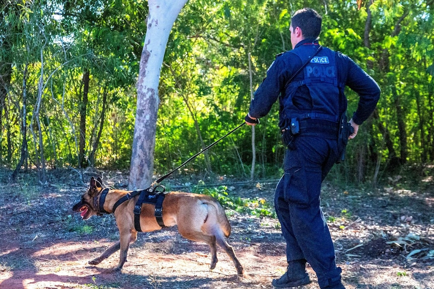 A police dog on a leash with a police officer running behind it.