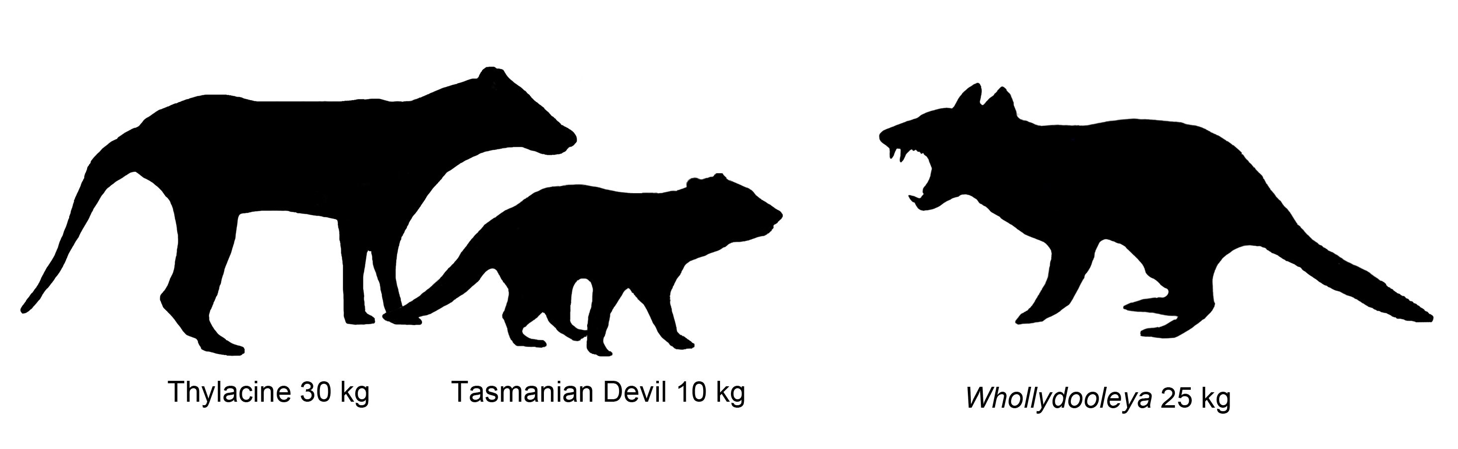 The outlines of three animals.