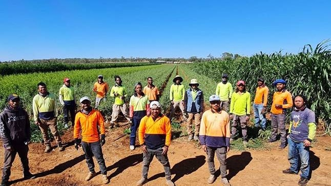 Image of 17 Timorese workers at Mossmont Nursery, NSW