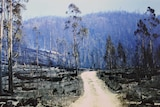One of 20 photographs depicting the devastation of Tasmania's 1967 bushfires being exhibited for the first time.
