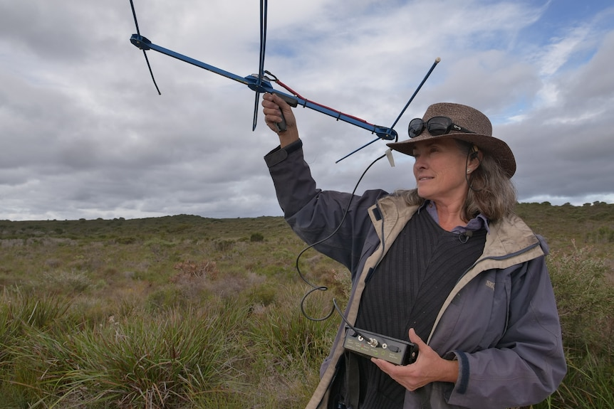 A woman stands in low scrub holding an antenna aloft.