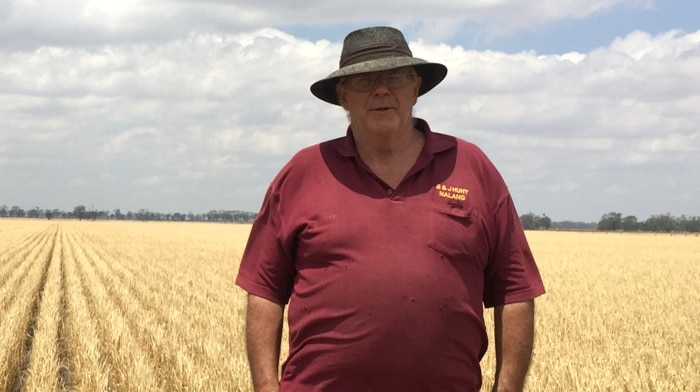 Man standing in a wheat paddock