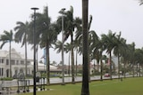Palm trees bend in the wind and rain on a wet street.
