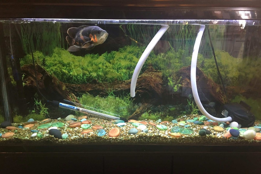 A fish tank in a Chinese restaurant.