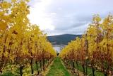 Winemaking Tasmania plans a 30 ha vineyard to be planted in August 2016