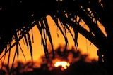 Bright orange sun shimmers through palm trees in a Brisbane suburb in March 2019.