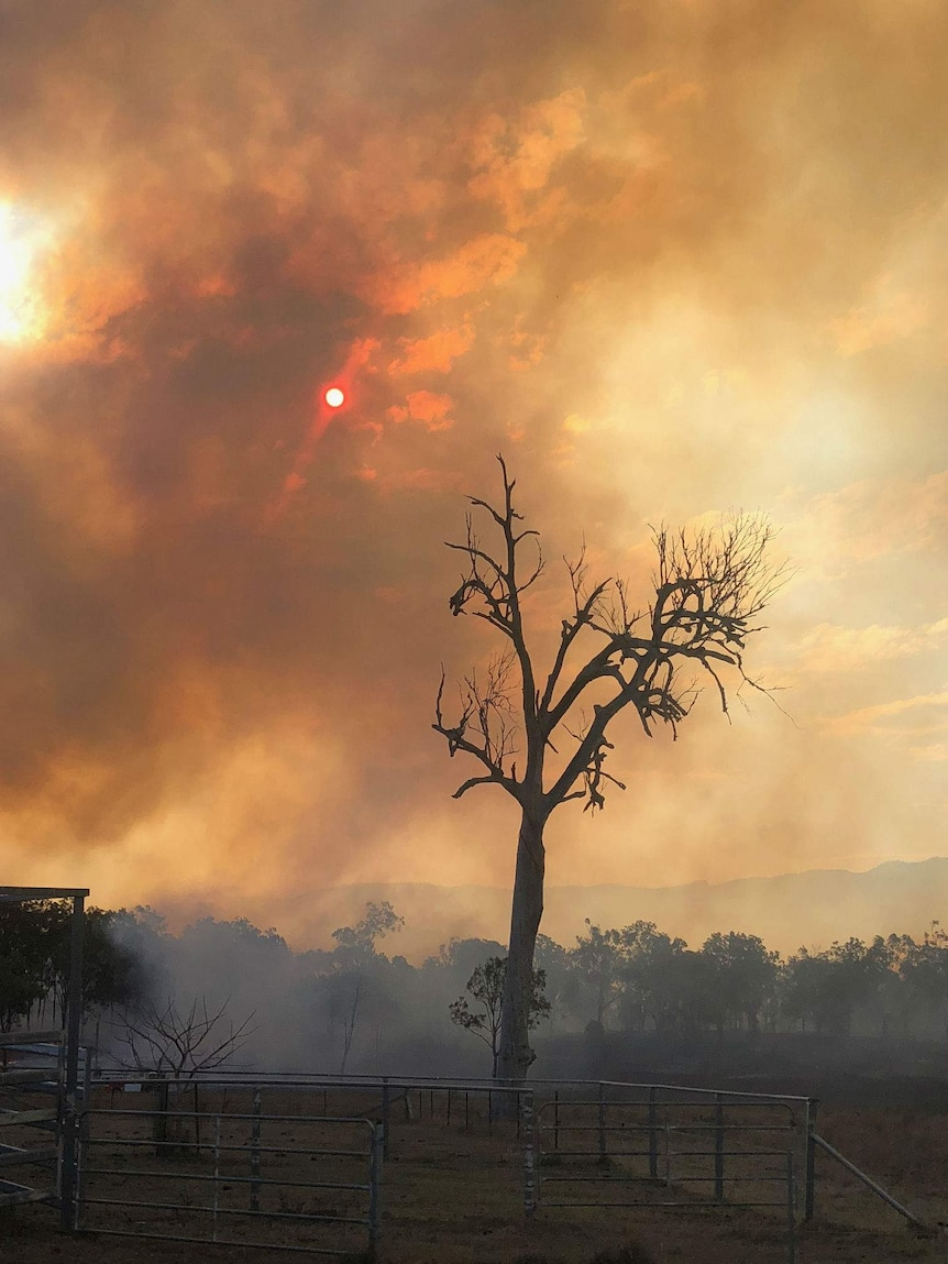 A blackened tree stands in a paddock with the sun above obscured by smoke.