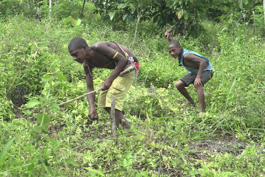 Two Tumam boys clear land for farming
