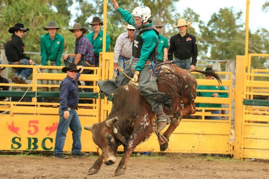 St Brendan's College Rodeo Club student riding a bull