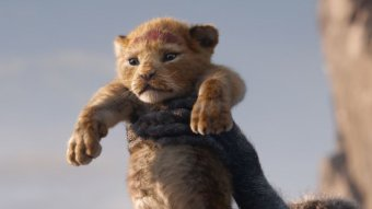 A still from the Lion King remake.