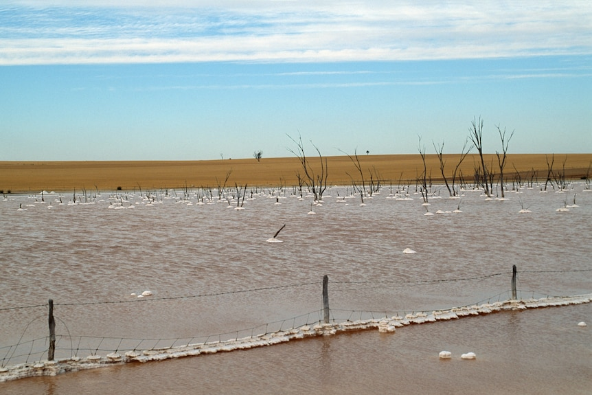 Clumps of salt are caught in a wire farm fence which is under water in the foreground.