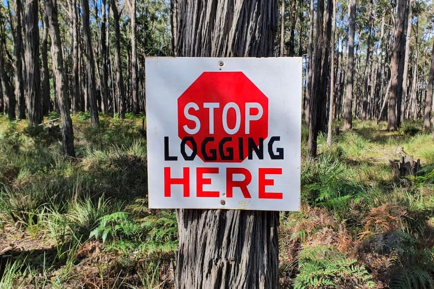 sign which reads stop here has been graffitied to say 'stop logging here'