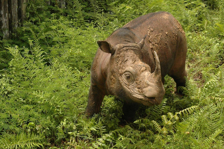 A rhino surrounded by greenery.