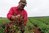 A farmer in a bright shirt holds up some of his produce.