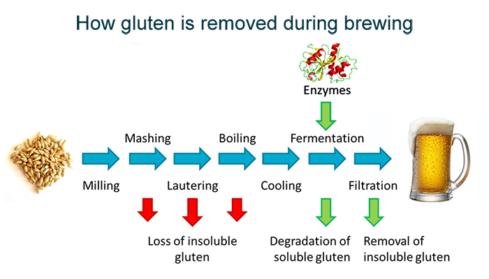 Illustration showing the beer brewing process
