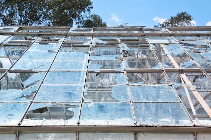 A close-up image of damaged glass in a greenhouse at CSIRO, still with broken glass.