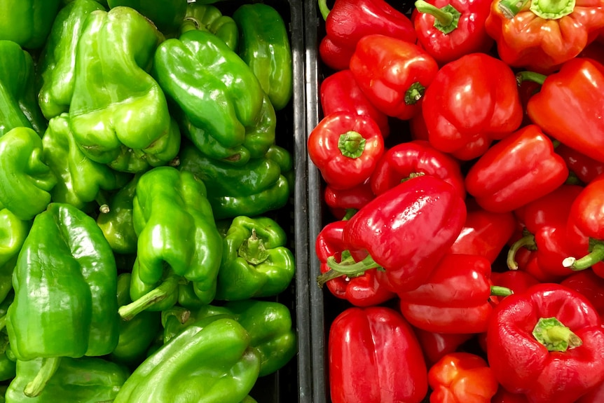 Trays of green and red capsicum.