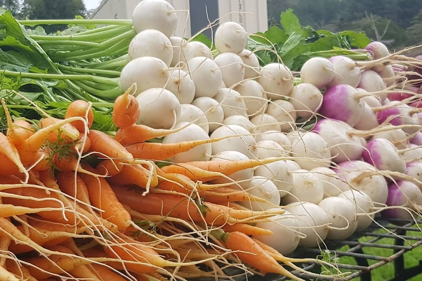 Parsnips, carrots and beets piled up on a table freshly plucked with the green tops still attached, bush in the background