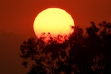 A bright sun set against a fire-red sky and trees in shadow