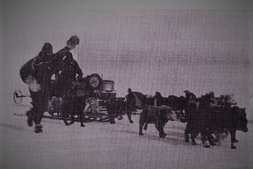 Black and white photo of Antarctic expeditioners and sled.
