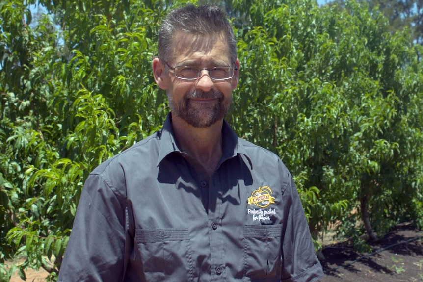 A man wearing a dark grey shirt stands in an orchard.