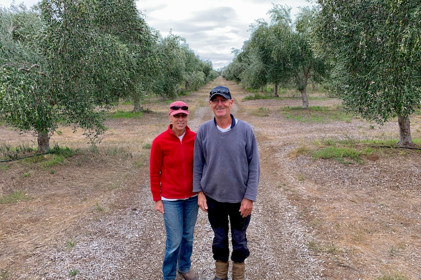 Two people are standing in an olive grove staring at the camera