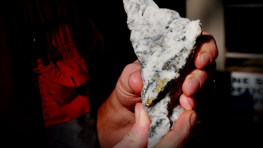A close up of men's hands holding a piece of white rock, the rock has glints of gold speck through it