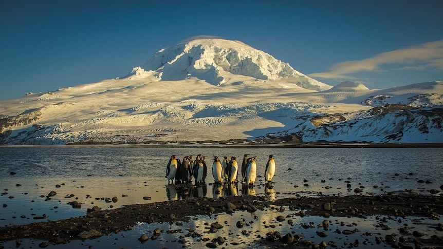 Penguins on a pebbly beach at Heard and McDonald Islands
