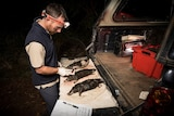 Platypus ecologist Joshua Griffiths examines animals drowned in opera house yabby nets