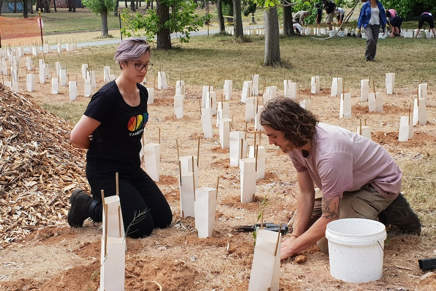 Two people kneel to plant trees in a freshly mulched area.