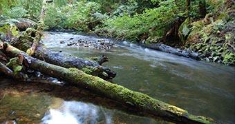 Tasmania world heritage listed forests