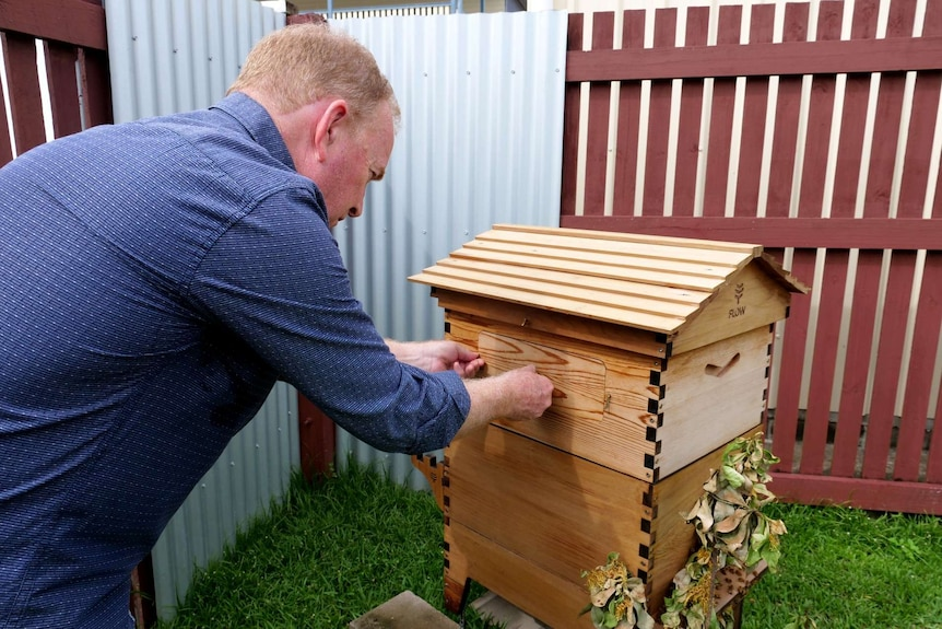 Musician Graeme Connors leans over to open a hatch on a beehive.