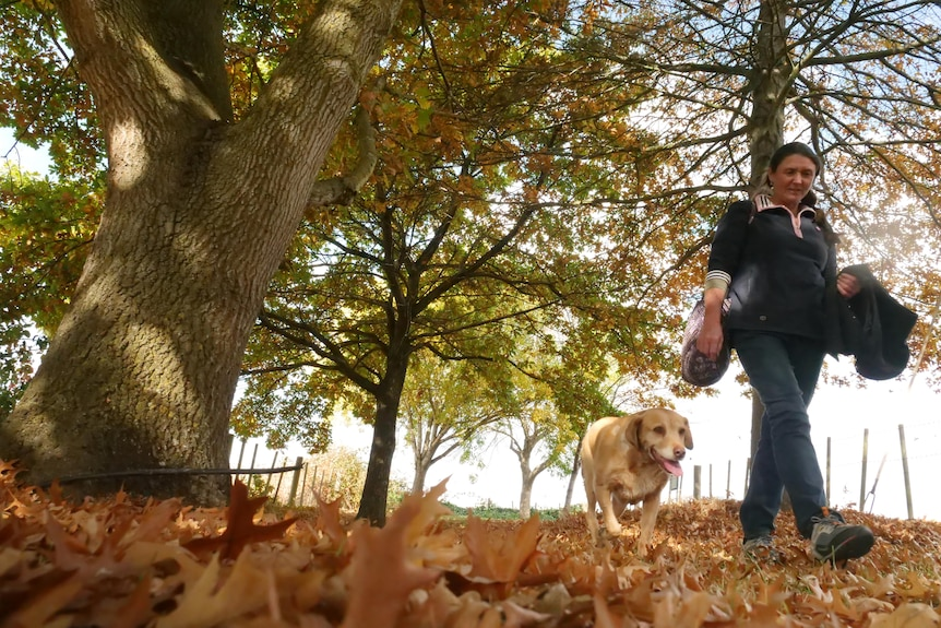 Woman and her golden retriever walking on autumn leaves under oak trees.