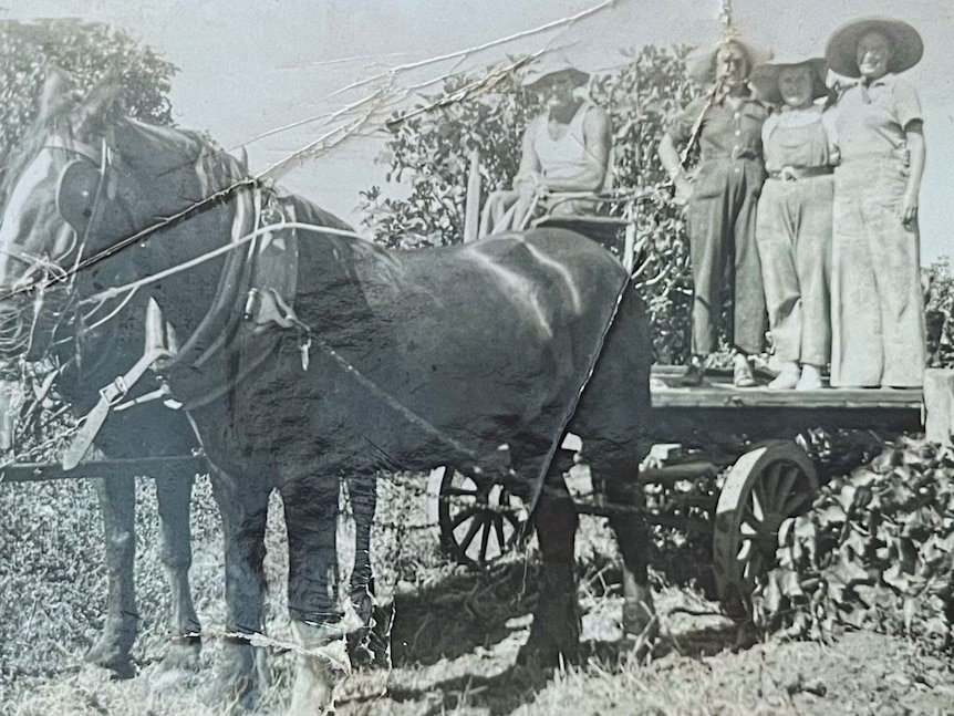 Black and white photo of a group of people standing on a flatbed tray pulled by two horses.