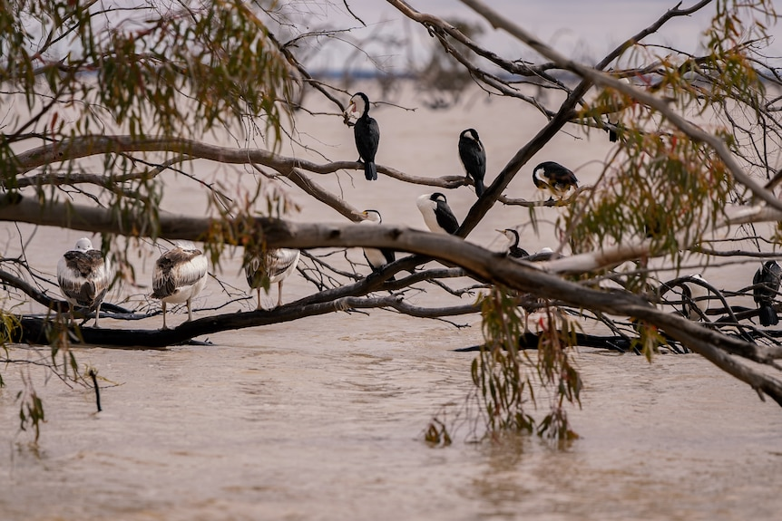 birds sitting on tree branches above water