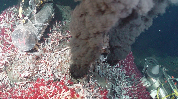 Hydrothermal vents surrounded by a tubeworm colony.