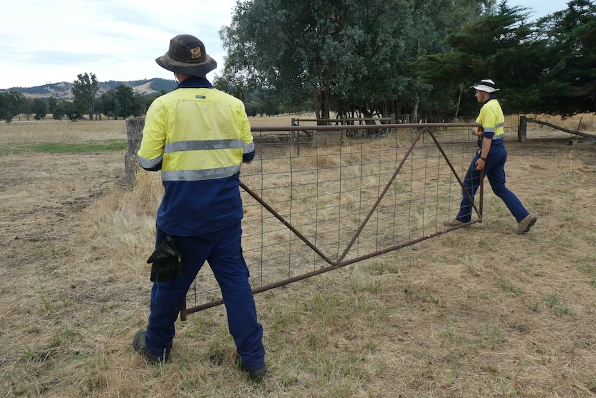 Two men carry a gate to a fenceline.