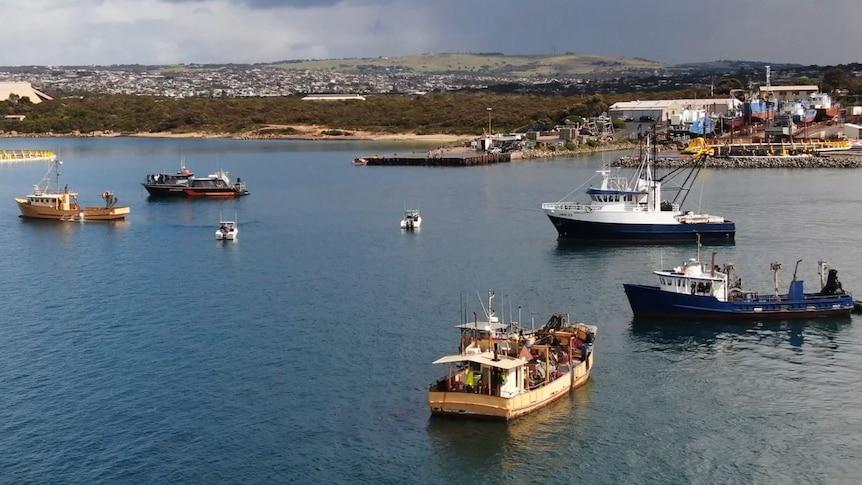 A fleet of boats sail close to a coast's edge.