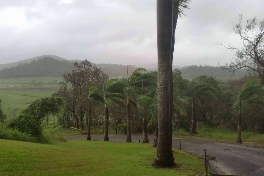 Wind batters trees and cane.
