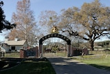 the gate of the Neverland ranch with trees and a building behind the gate