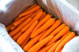 Carrots ready for export