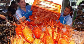 Two men tip over a crate of crayfish onto ice at the fish markets.